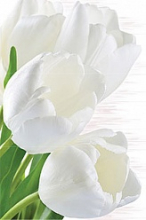 """Панно """"Сприн"""" тюльпаны (50*75) 06-01-1-34-04-81-667-0 купить"""