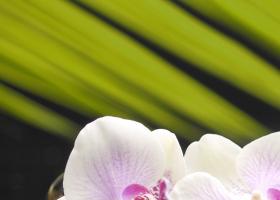"""Панно """"Орхидея 1"""" фисташковая  (25х35) купить"""