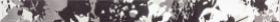 Бордюр TENDENCE черно-белый цветы WLASZ005 (60х4,5) купить