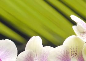 """Панно """"Орхидея 2"""" фисташковая  (25х35) купить"""