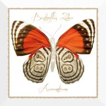 Декор Farfalla arancione (30х30) * купить