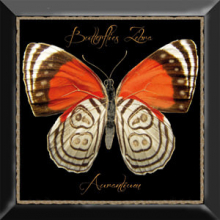 Декор Farfalla arancione negro (30х30) * купить