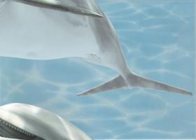 """Вставка """"Дельфин 5"""" бирюзовый (25х35) купить"""