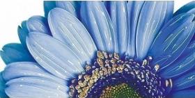 Декор Нидерланды синий (25х50) 10-03-65-318 купить