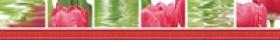 Бордюр Тюльпаны светлый (7х50) 77-05-47-160 купить