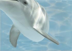 """Вставка """"Дельфин 8"""" бирюзовый (25х35) купить"""